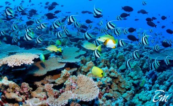 Beautiful Coral reefs