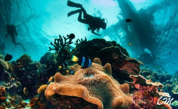 Maldives Under Water Experience