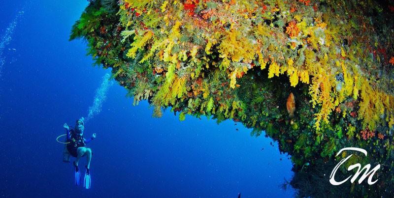 Golden Wall Vaavu atoll - Best diving Experiance