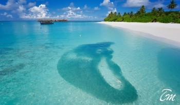 Angaga Island Resort and Spa - Babies of shark