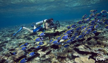 Diver in house reef at Ihuru angsana