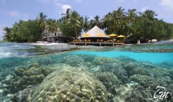House reef at Ihuru angsana