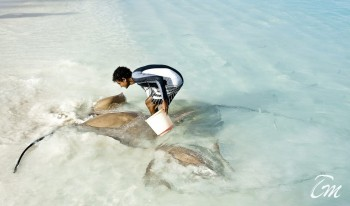 Manta Ray Feeding At Banyan Tree Vabbinfaru Maldives