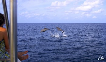 Six Senses Laamu Maldives - Dolphin Cruise