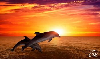 Vakarufalhi Maldives - Dolphin Cruise