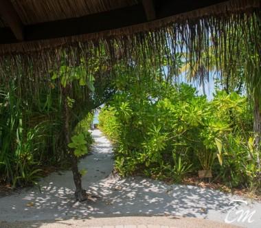 Coco Palm Dhuni Kolhu Maldives Beach Villa beach access